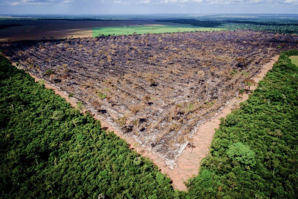 desmate ilegal amazonia